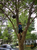 My nephew the monkey - aka veteran tree climber (photo: Carissa Hickling)