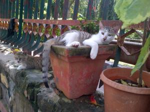 Cat-20131012-01083