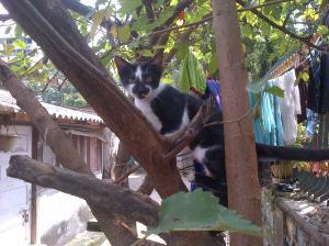 Cat-20131012-01084