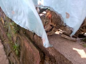 Cat-20131012-01087