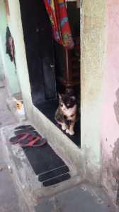 Cats n Doors 1