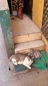 Cats n Doors 2