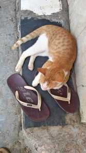 Cats n doors 3