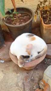 The latest greatest curled up potted cat...