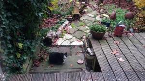 Well hello little black n white kitty