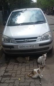 Cat Car Trio
