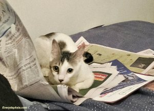 You weren't reading that, were you?