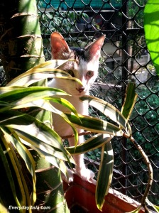 Deep in the jungles of Bandra Reclamation, the wild Zoe may be found in her natural potted plant habitat