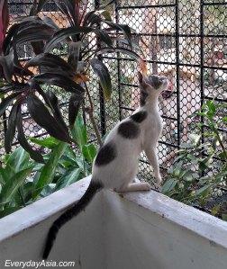 Bird... must get bird... must.. must!!!